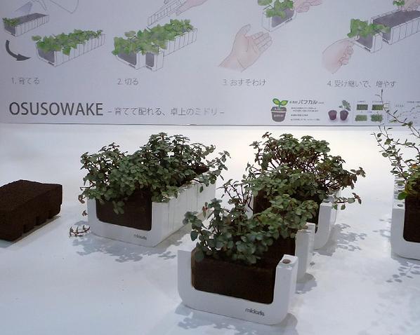 osusowake-2