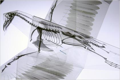 Mitsubishi Chemical Junior Designer Award Takayuki Hori 2 2010 Mitsubishi Chemical Junior Designer Award | Takayuki Hori