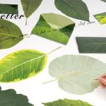 leaf letter-main