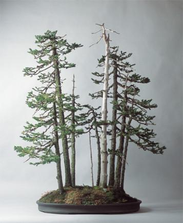 matsuya ginza bonsai 3