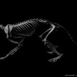eiji yuzawa beauty of bones (6)