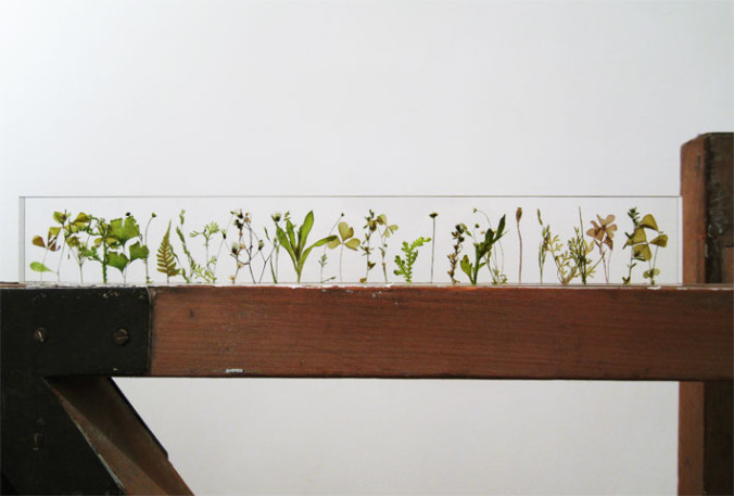 garden ruler norihiko terayama (6)