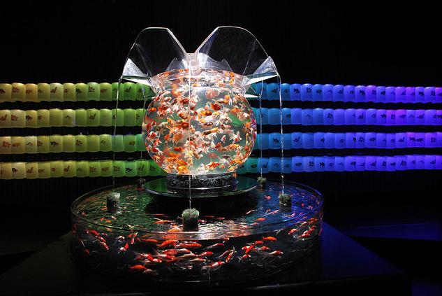 Art Aquarium Exhibition Over 5000 Goldfish On Display In