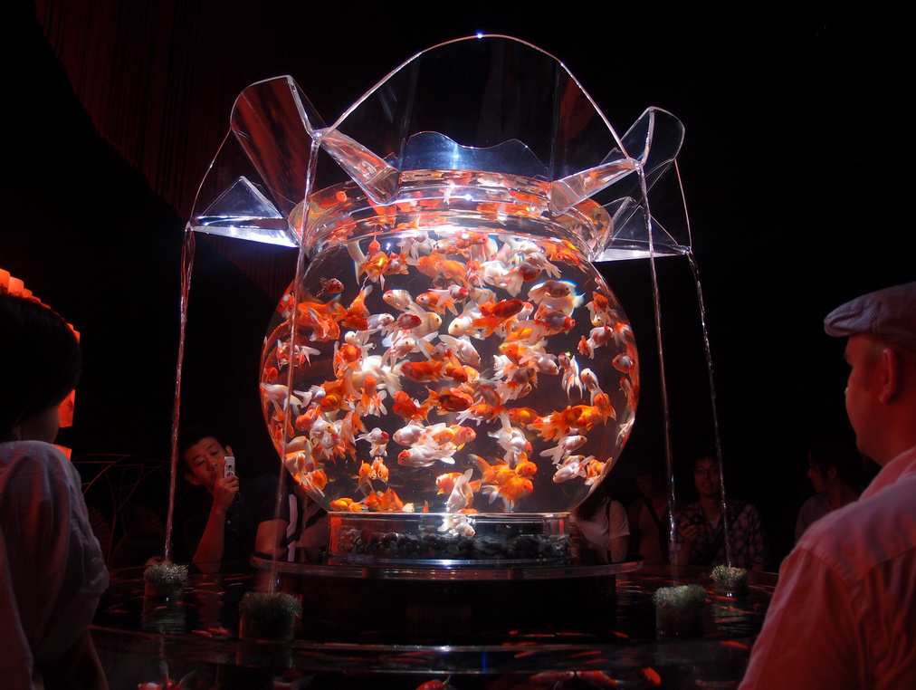 Art aquarium exhibition over 5000 goldfish on display in for Pop up aquarium