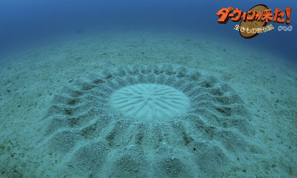 mystery of under water crop circles Reddit: the front page of i can honestly say before today i had no idea underwater crop circles even never heard of mystery crop circles before but now that i.
