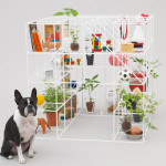 architecture for dogs (10)
