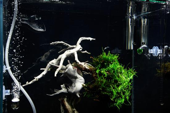 underwater bonsai makoto azuma (4)