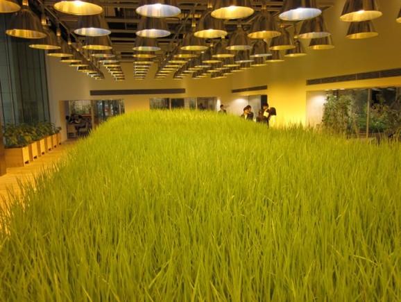 07-urban-farm