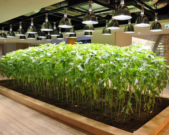Urban Farming And Corporate Culture Collide In This Tokyo
