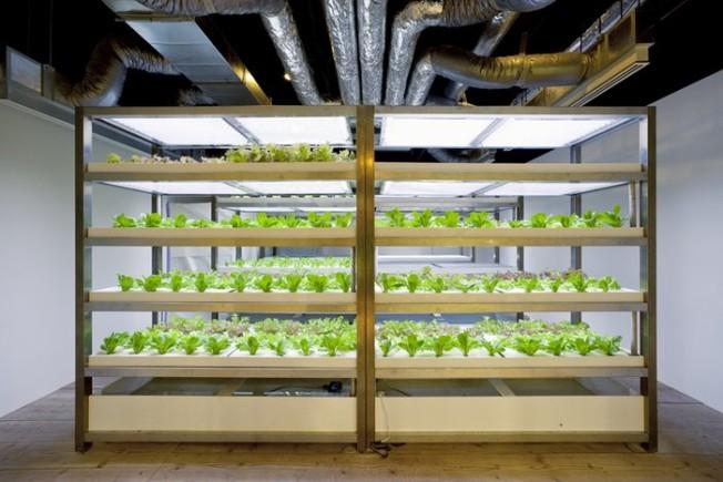 16-urban-farm