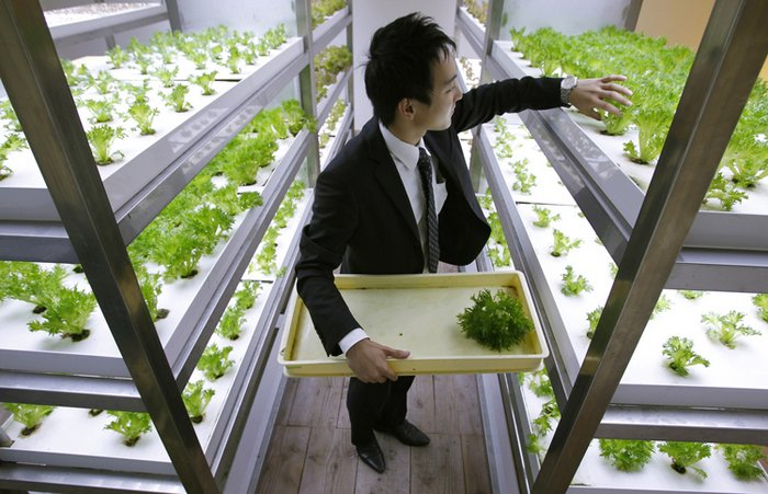 urban farming and corporate culture collide in this Tokyo office building