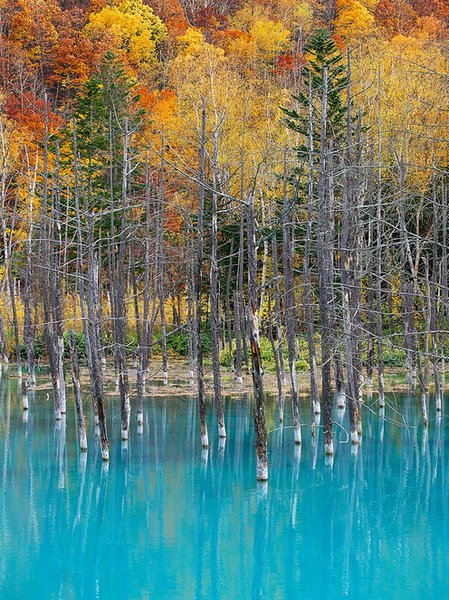 blue pond hokkaido (4)