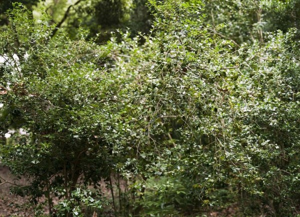 hapticgreen06