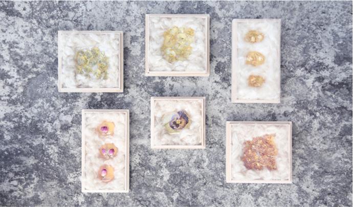 herbarium_09