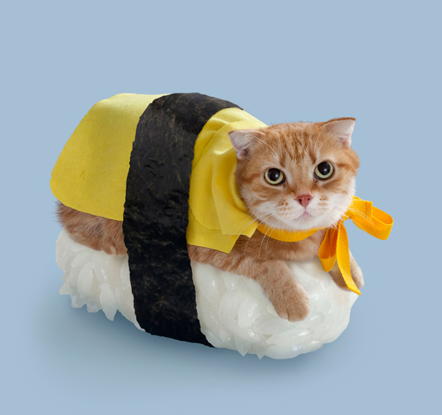Find great deals on eBay for sushi costume. Shop with confidence. Skip to main content. eBay: Shop by category. Bootique Cat Costume Sushi Roll Feeling Fresh Hat Kitty One Size Fits Most Petco See more like this. Sushi Pet Costume, , Rubies. Brand New. $ Buy It Now +$ shipping.