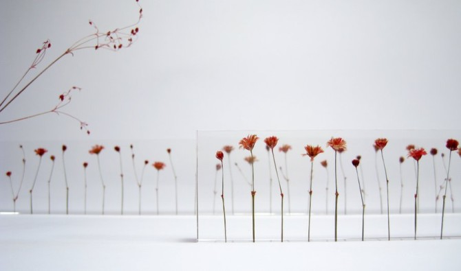 f,l,o,w,e,r,s | an acrylic ruler embedded with dried flowers for intervals