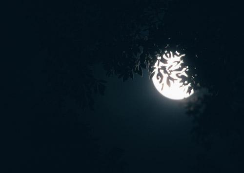 Hajime Nakamura wagashi sweets and moon