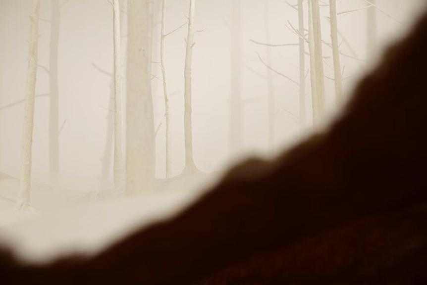 Wald aus Wald by takashi kuribayashi (3)