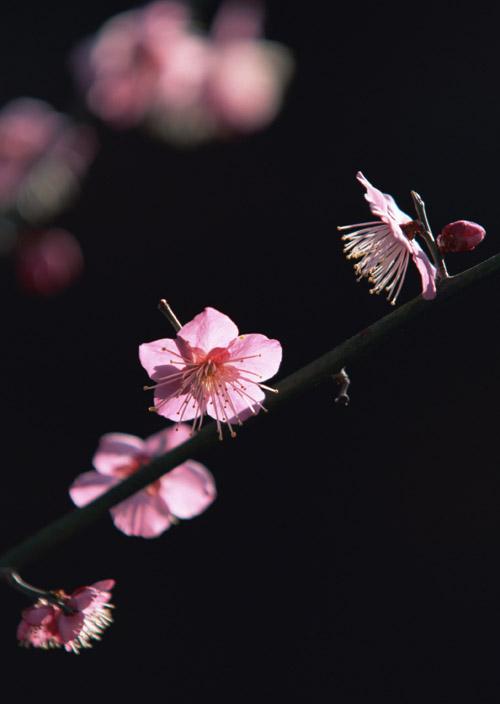 Hajime Nakamura wagashi sweets and flower