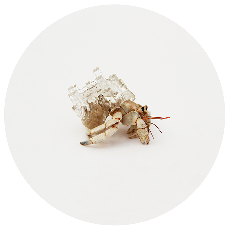 greece hermit crab shell by aki inomata
