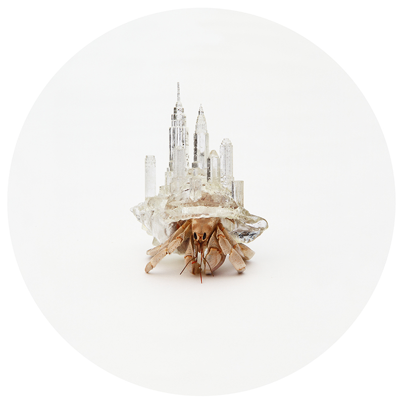 NYC hermit crab shell by aki ino