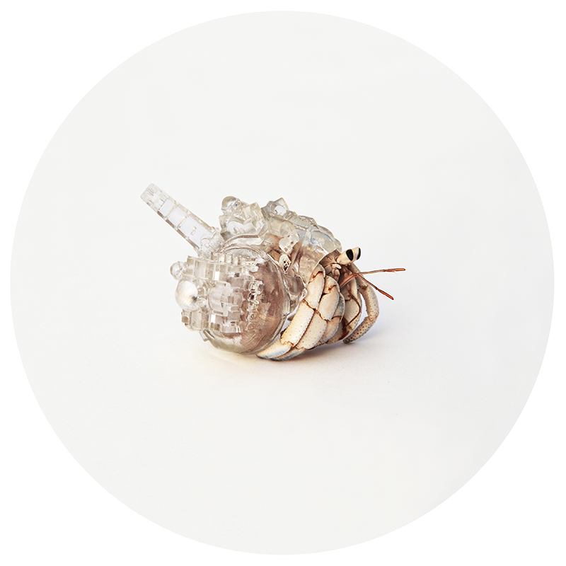 Hermit Crab Shell Designs Santorini Hermit Crab Shell by