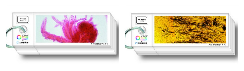 science-techni-color-histology-slides (2)