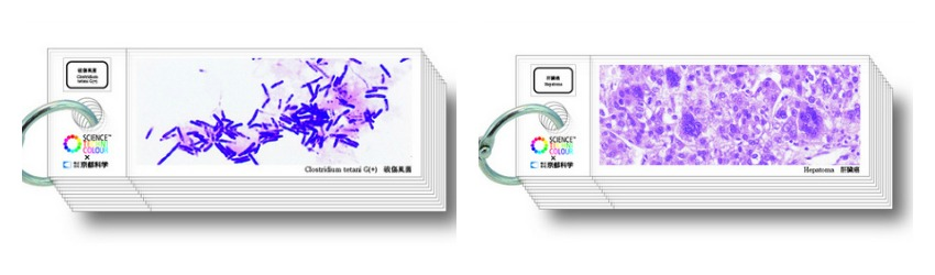 science-techni-color-histology-slides (3)