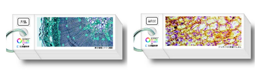 science-techni-color-histology-slides (4)