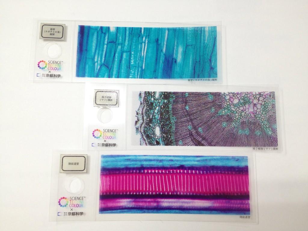 science-techni-color-histology-slides (6)