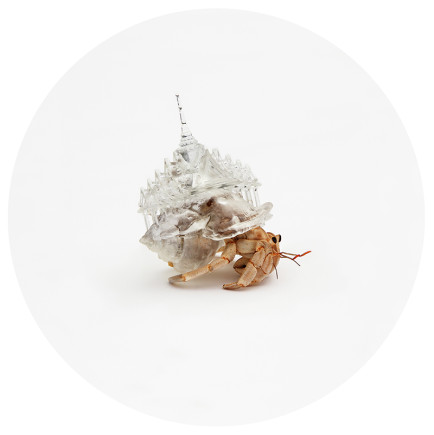 3D Printed Architectural Hermit Crab Shells by Aki Inomata