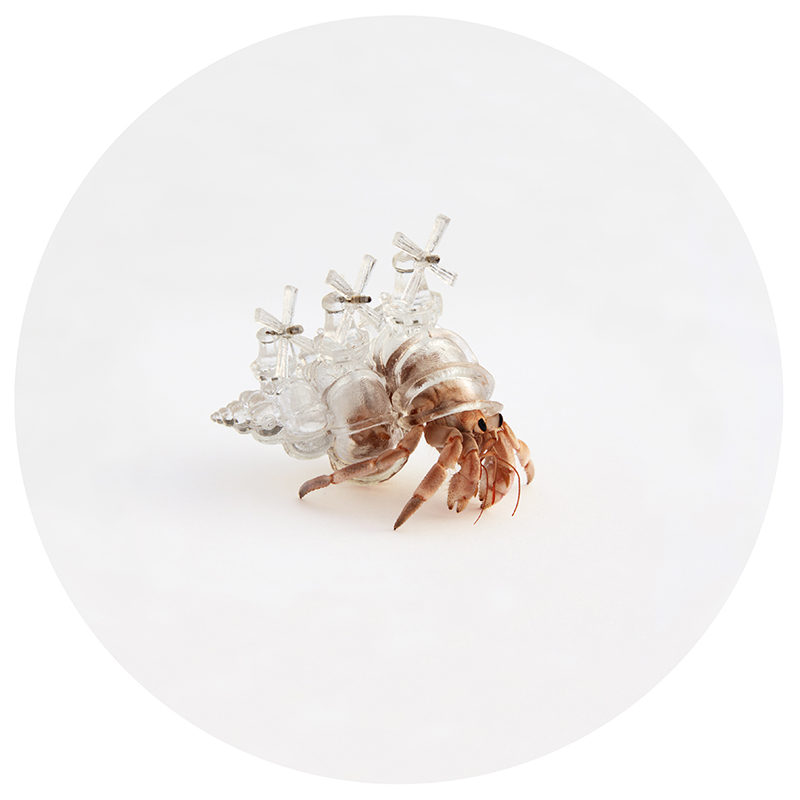 windmill hermit crab shell by aki inomata