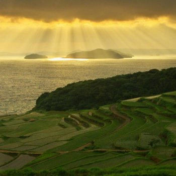 Japan's Vanishing Terraced Rice Fields
