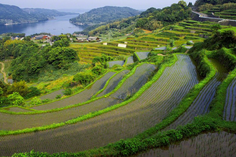 Japan's Vanishing Terraced Rice Fields