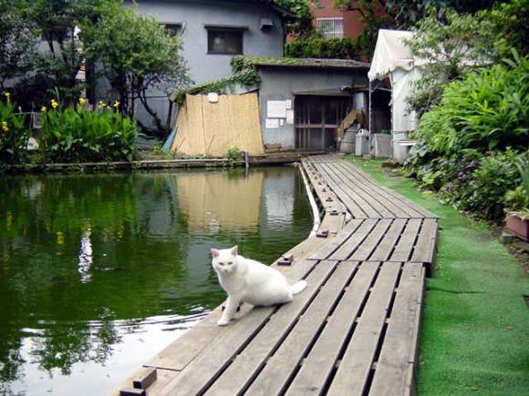 shurakuen tsuribori tokyo fishing