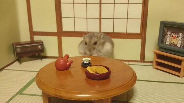 ginji hamster in japanese room