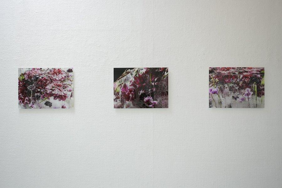 kenji shibata frozen flowers at tachibana gallery