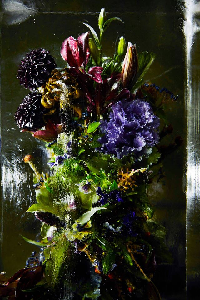 iced-flowers-makoto-azuma (8)