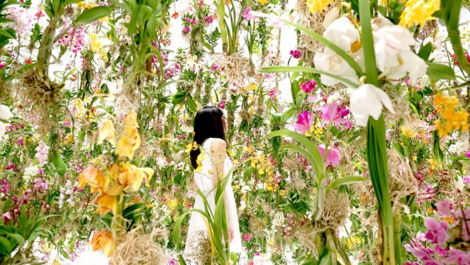 floating flower garden by teamlab at miraikan
