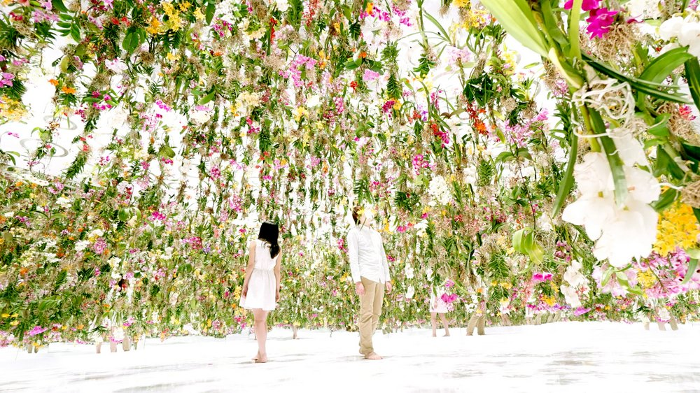 Floating Flower Garden By Teamlab At Miraikan An Immersive Interactive  Garden Of 2300 Floating Flowers Inspired