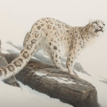 Exquisite Paintings of Wildlife by Atsu Harada