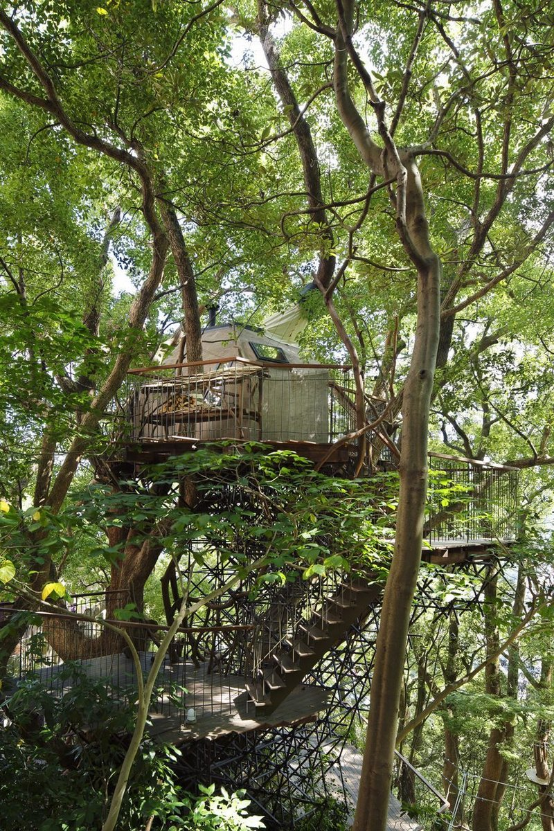 Biggest Treehouse In The World 2013 japan's largest treehouse is a sprawling structure built around a