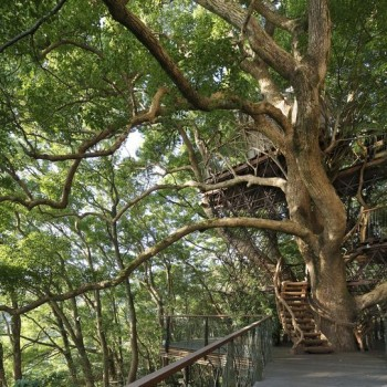 Japan's Largest Treehouse is a Sprawling Structure Built Around a 300-year Old Tree