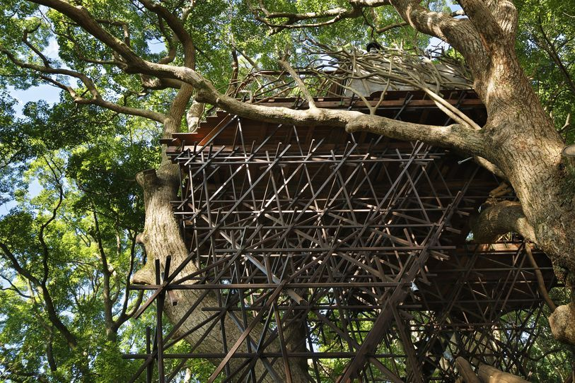 japan s largest treehouse is a sprawling structure built around a - Biggest Treehouse In The World 2013