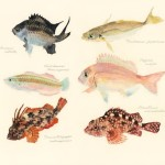 fish from wakayama marina city