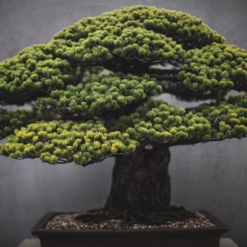 In Training: A Documentation of the Slow Art of Bonsai Trees
