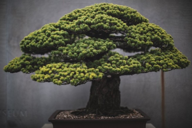 stephen voss bonsai art book