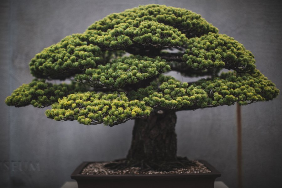 In Training A Documentation Of The Slow Art Of Bonsai Trees Spoon Tamago