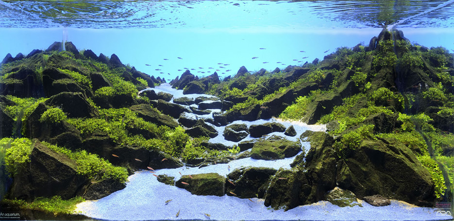 The Majestic Aquariums Of The Tokyo Aquascape Union Spoon Amp Tamago