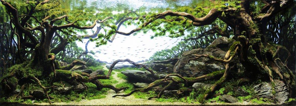 The Majestic Aquariums of the Tokyo Aquascape Union ...